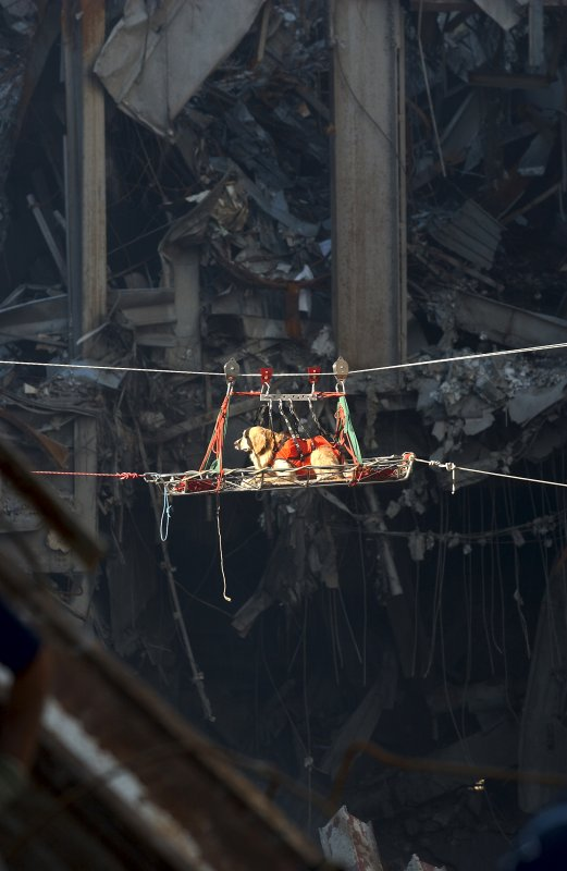 A search and rescue working dog is transported out of the depris of the World Trade Center in New York City