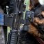 Rexo, the Brave Defender Military Working Dog, MWD