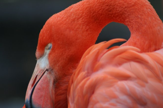 Flamingo up close & personal