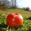 Free Red Apple on Green Grass of Fertility