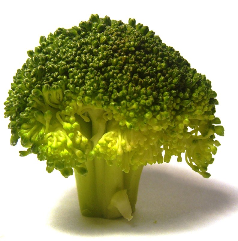 Broccolli doesn't grow on trees, you know