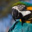 Florrie's pet Macaw Parrot bird named Airplane