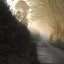 Misty Morning Lane, West Devon
