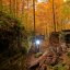 A light in the forest...
