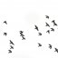 pigeons in flight - make your own bird brush using this photo