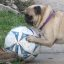 Soccer Pro Sophia