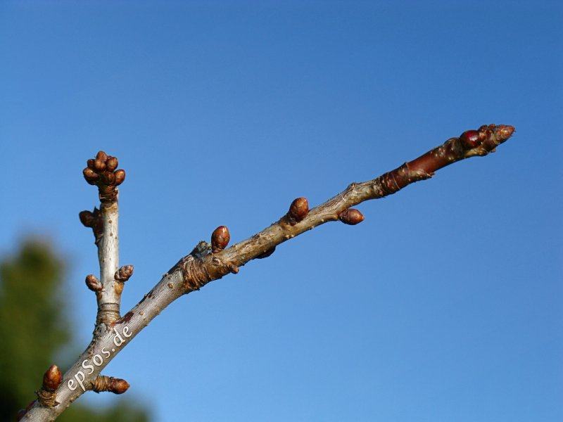 Blue Sky Growing a Tree Branch in the Garden of Success