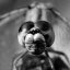 Dragonfly - black and white