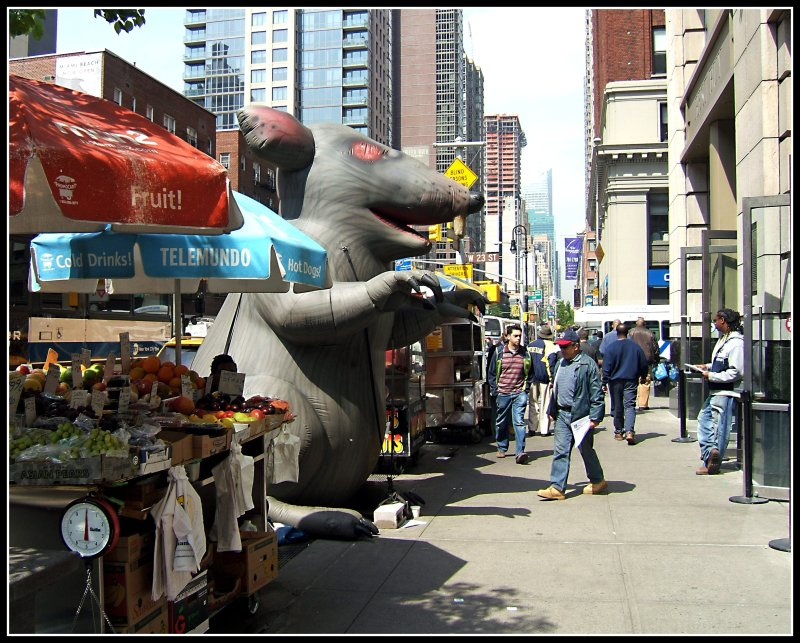 Giant Rat and Unsuspecting Victim in NYC