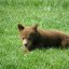 Baby Bear in South Dakota