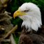 """The second eagle """"MT1809"""""""