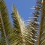 Palme 2
