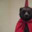 Bear with a red cape at the MOCA