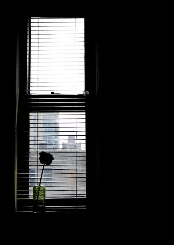 Window with a flower silhouette