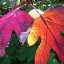 159 a kiss of sun-- and exploding colors