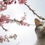 Cat & cherry blossoms 1