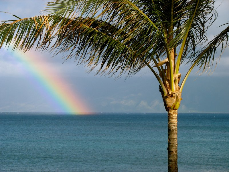 Maui rainbow with Palm Tree