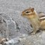First chipmunk photo taken in 2007 -- Earth Day