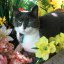 kitty in flowers