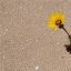 Einsame Blume im Sand