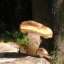 Der Pilz