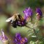 210e bee and purple blooms