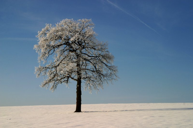 Winterbaum ( reloaded )