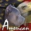 Patriotic Symbols of America, the flag, the bald eagle, and the pitbull dog...
