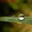 Drop of Dew