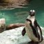 This Penguin Think He's So Tough
