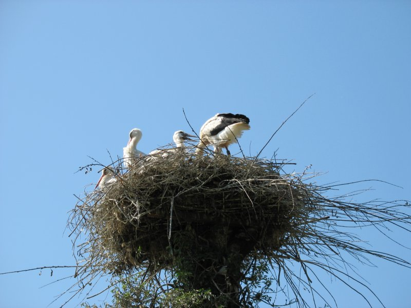 Storchen Nest