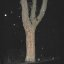 -tree with A-sign standing in monsoonal night