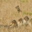 4 Burrowing Owls and a giant squirrel