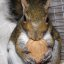 1 Of The 4 Gray Squirrel Rehabbers