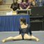 UCLA Bruins Women&#039;s Gymnastics - 2026
