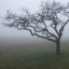 Bser Baum im Nebel