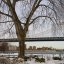 Manhattan Bridge With Tree
