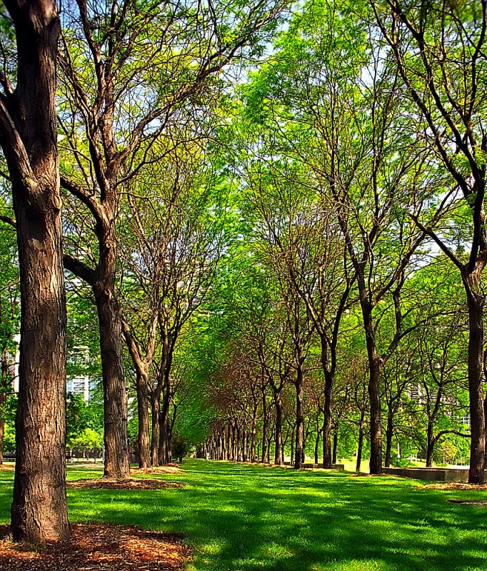 "Chicago - Grant Park  ""Linear Trees"""