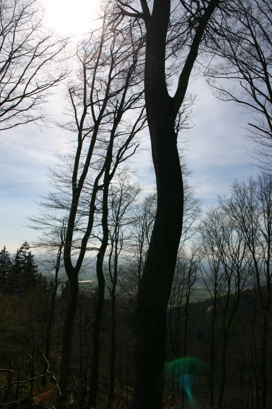 Odenwald View