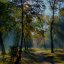 Wald im Herbst_hdr