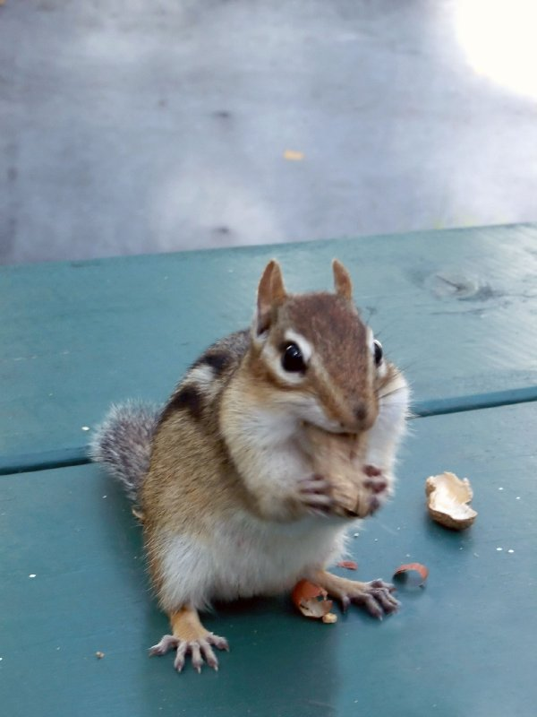 Little Dude With A Nut
