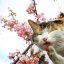 Cat & cherry blossoms 2