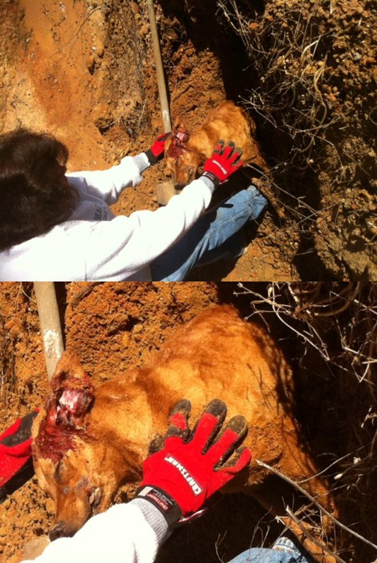 Dead dogs found in landfill today, 22 shelter dogs used for target practice...