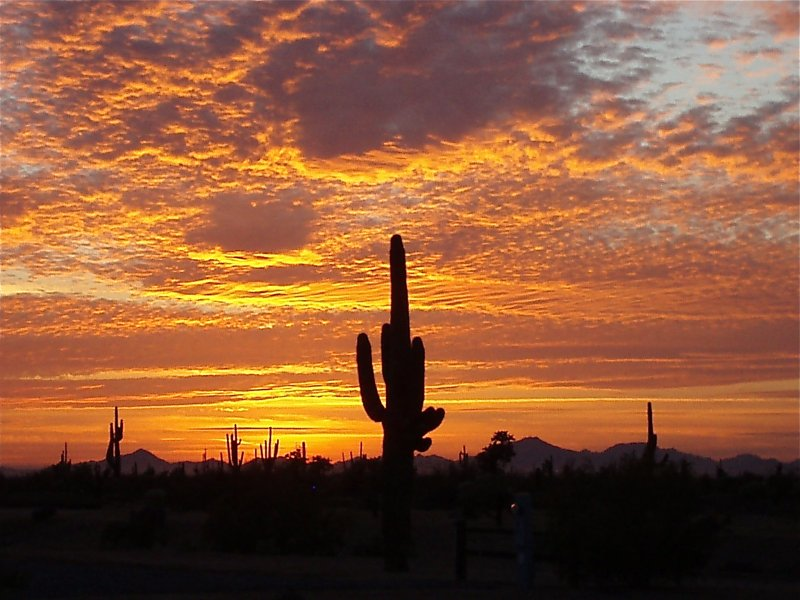 Twilight in the Sonora Desert