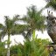 Bronze Parrot Statue behind Tropical Palms