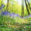 Path Of Bluebells