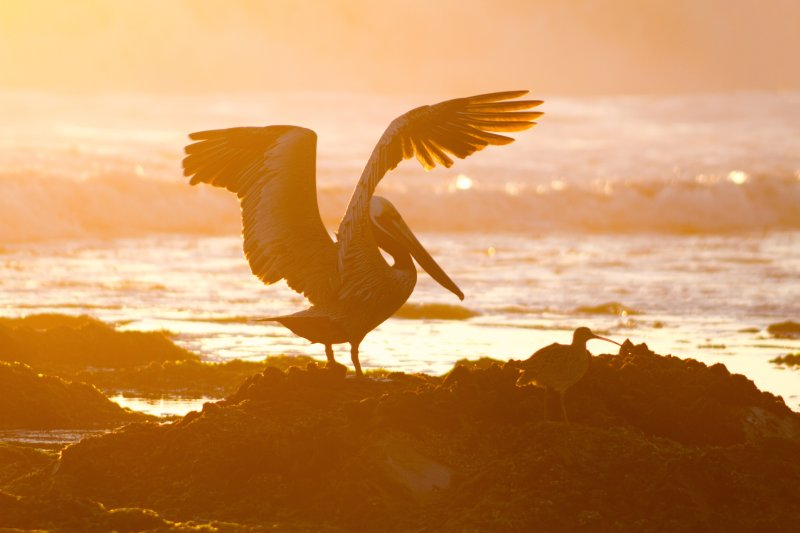 Sunset Wings