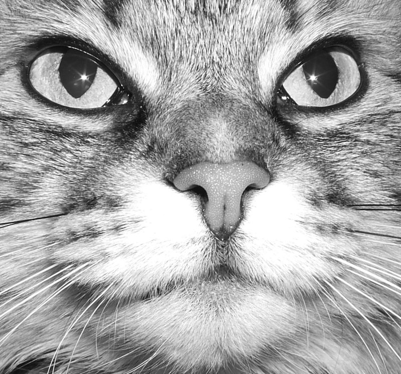 Cleo in Black and White