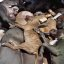 Graphic Dead family pet dogs & puppies killed by the city of Denver, CO because of Breed Specific Legislation (BSL) discrimination