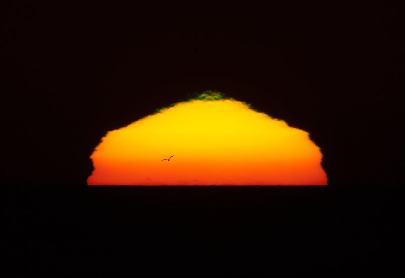 Sunset with small green flash and a gull bird flying forming a silhouette in front of the blazing setting sun with 1200mm (600mm + 2X Tele-extender) off the coast of Morro Bay, CA 30 Oct. 2009 11x16-larger-crop